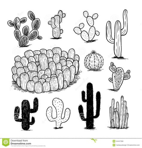 cactus doodle cactus collection vector illustration stock vector image