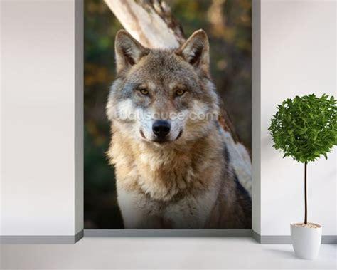 wolf wall murals grey wolf wallpaper wall mural wallsauce usa