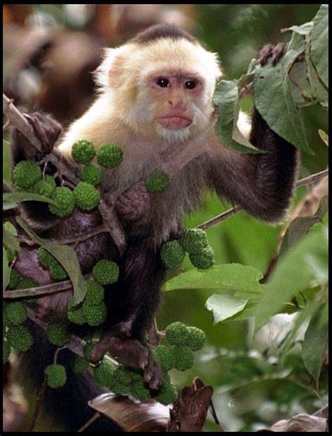 Which Animal Occupies A Rainforest Floor Niche - costa rica mammals