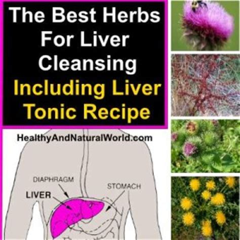 The Best Liver Detox Cleanse by Top 6 Herbs To Detox Your Liver Including Liver Tonic Recipe