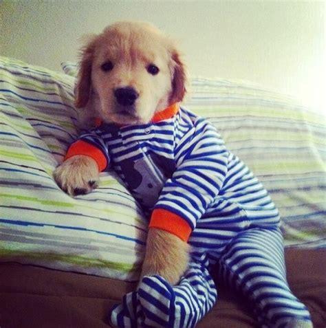 puppy in onesie puppy in a onesie dogs