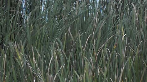 pas grass swinging sw grass on vimeo