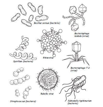 Germs Worksheets For Kindergarten