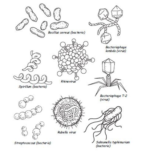 germs cover your cough coloring coloring pages