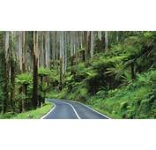 Road Jungle Forest Trees HD Wallpaper  Nature And