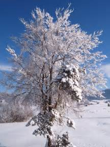Winter Tree by File Winter Tree Jpg Wikipedia The Free Encyclopedia