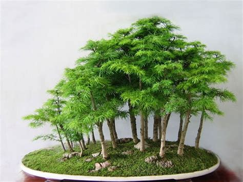 old bonsai tree 11 most beautiful oldest bonsai trees in the world