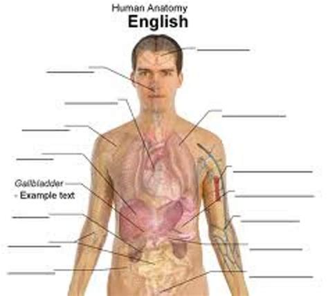 the body in the human body body human human figure