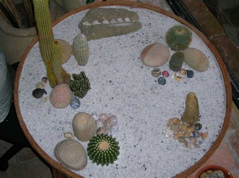 giardino zen miniatura cactofili forum di cactus e succulente leggi