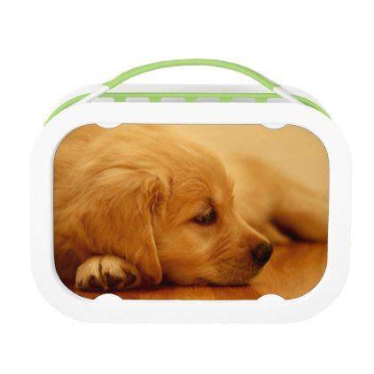 golden retriever gift ideas best 25 golden retriever gifts ideas on baby golden retrievers golden