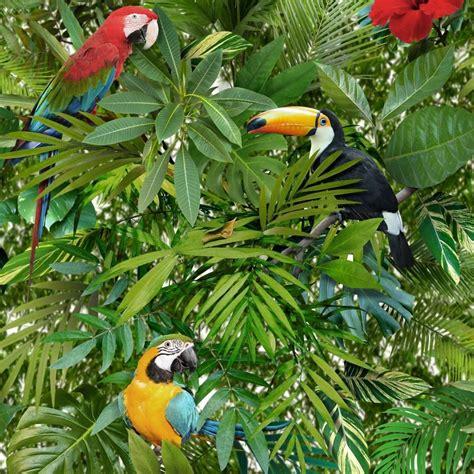 Tropical Jungle tropical jungle parrots wallpaper toucan bird green forest