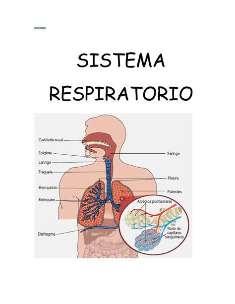 imagenes del sistema respiratorio ingles calam 233 o conocer la estructura y funci 243 n del sistema