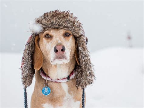 winter dogs photo collection winter snow