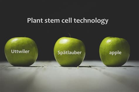apple stem cell what are plant stem cells and the case of the swiss apple