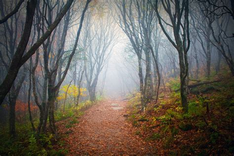 free stock image into the forest free stock image by kevron2001 on deviantart