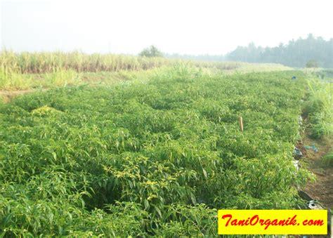 Obat Penyakit Tanaman Organik Nopatek tani organik cara mencegah hama dan pada penyakit tanaman