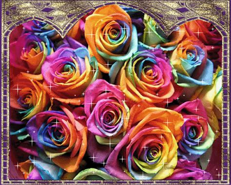 COLORFUL ROSES Facebook comments and graphics COLORFUL