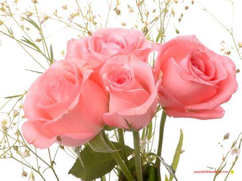 khoobsurat wallpaper flower valentine flower pictures beautiful flowers
