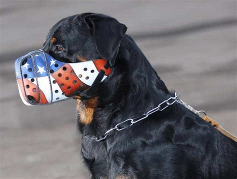 rottweiler muzzle order leather rottweiler muzzle for attack walking now