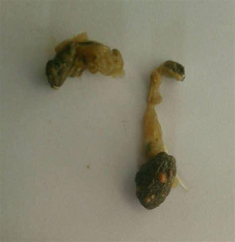 vetplus promax small breed 9 ml smash g8 de