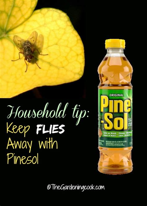 keep flies away with pine sol the gardening cook