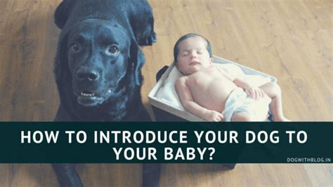 how to introduce a puppy to an how to introduce your to the baby