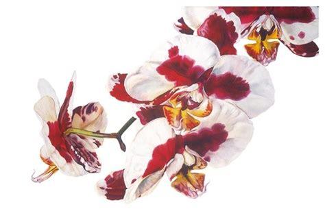 rosie sanders flowers a 1849943974 rosie sanders phalaenopsis elegant polka dots jonathan cooper