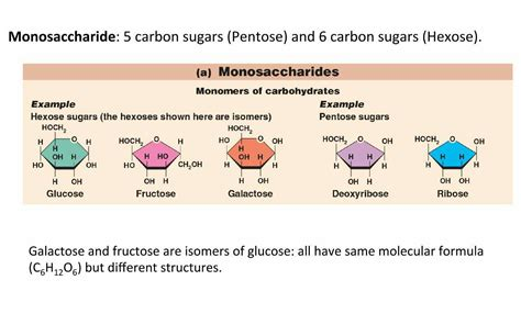 carbohydrates and lipids lec 4 chpt 2 organic chemistry carbs lipids proteins