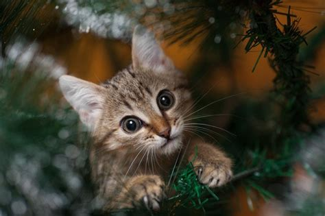 creative ways to cat proof your christmas tree cattime