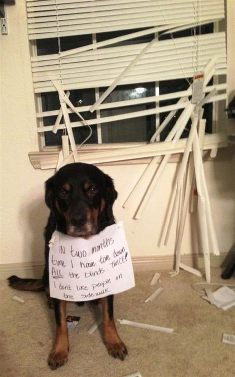 dog shaming hilarious pictures  pet shaming