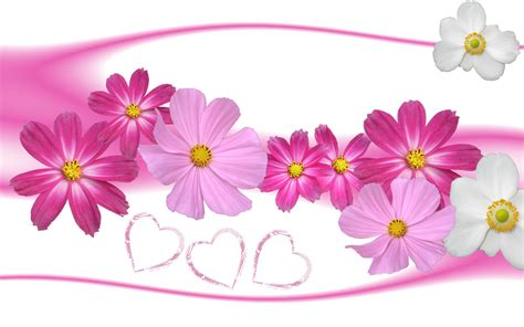 gambar gambar bunga berwarna merah muda