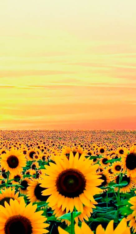 imagenes tumblr com sunflower wallpaper tumblr