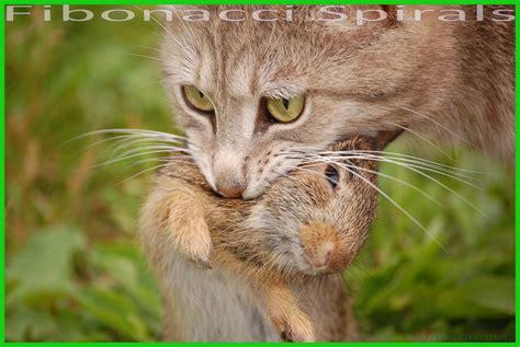 Prey Of The Predator predator vs prey fibonacci spirals