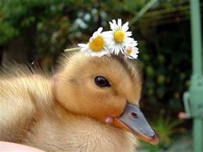 cute baby animals 1funny com