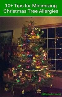 minimizing christmas tree allergies betsys photography