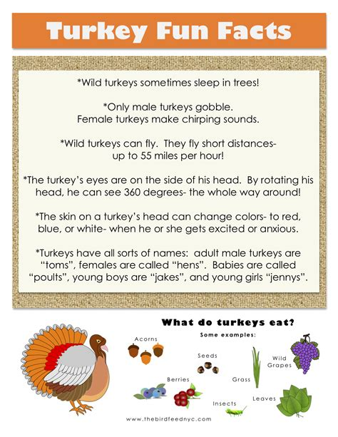 thanksgiving printable turkey fun facts