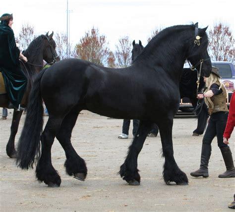 black stallion horse horse 37 black stallion by cyborgsuzystock on deviantart