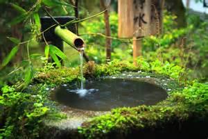 bassin bambou tout