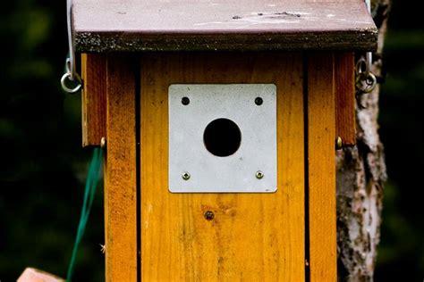fix bird house entrance holes