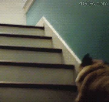 pug stairs gif world s funniest gifs joke pictures