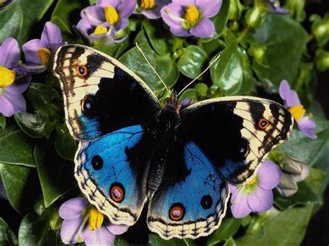 Related pictures farfalle tatuaggi butterfly tattoo disegni lecce