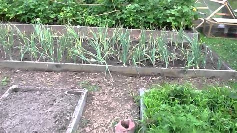 backyard vegetable garden and farm
