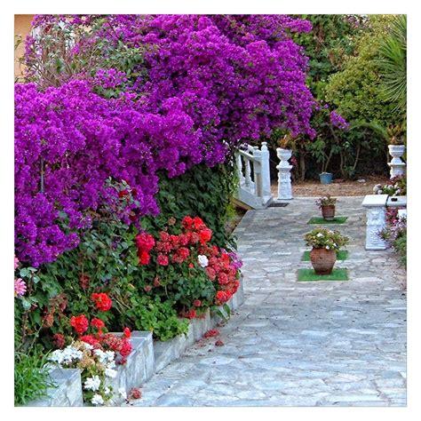 colorful flower garden colorful gardens flowers by svitakovaeva on deviantart