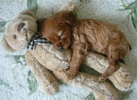 puppy sleeping in bed it s national puppy day so happy puppy day friends