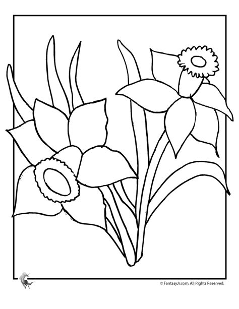 coloring pages daffodil flowers daffodil coloring pages