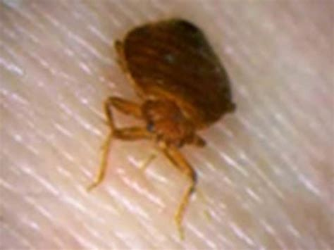 Bed Bugs Dryer by 1000 Images About Fighting Fleas And Bed Bugs On