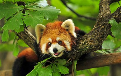 20 Beautiful animal photos   part 2 (20 pics)   Amazing