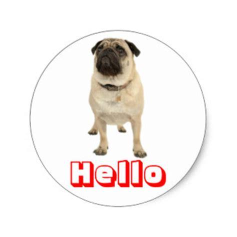 hello pug pug puppy stickers zazzle co uk