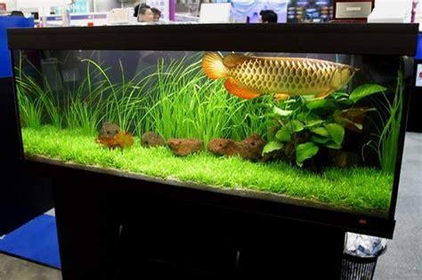 Aquarium Design For Arowana | arowana dragon fish tank fish pinterest fish tanks