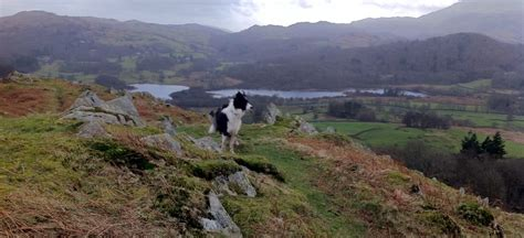 district dogs friendly lake district friendly ideas accommodation